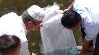 Kearifan lokal Ikan Larangan Batang Ampu Simpang Tigo Pasbar Dimulai Sejak 21 Februari 2021