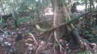 Sumber Air Panas Ditemukan Ditengah Hutan Lisun Sumpur Kudus