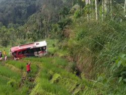 Bus Pastra Masuk Sawah di Simpati Pasaman, 2 Penumpang Meninggal Dunia Puluhan Korban dievakuasi